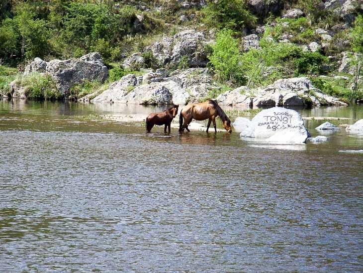 Nature Argentina near Cordoba Horses