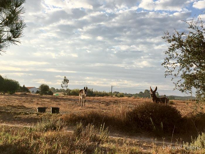 donkeys nature alentejo countryside zen relaxing