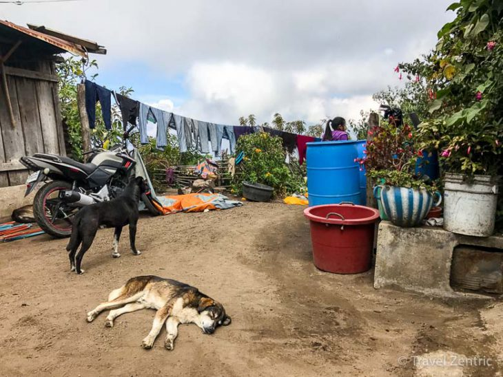 volcano acatenango dogs guatemala